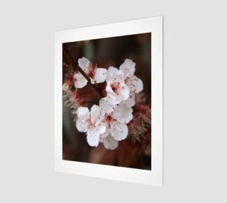 Aperçu de Blossom 2