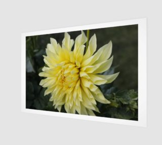 Yellow Dahlia Wall Art preview