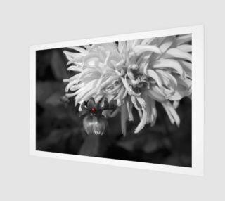 Ladybug on a Dahlia Bud-B&W Wall Art preview