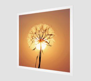 Golden dandelion preview
