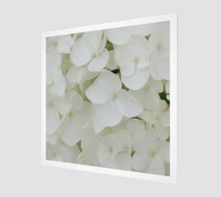 Hydrangea Flowers White Blossom Floral Photography preview