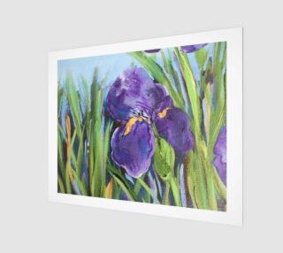 Aperçu de Purple Iris 20 x 16