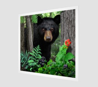 FOREST - SUMMER - BLACK BEAR 001 preview