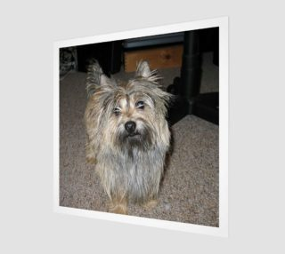 cairn terrier full preview