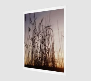 Before Sunset Grasses preview