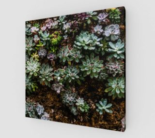 Aperçu de Wall of Succulents
