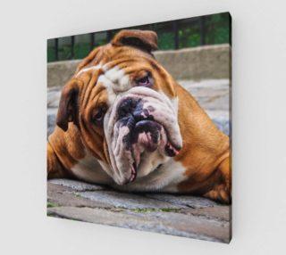 Aperçu de Chien grognon  /  Grumpy Dog