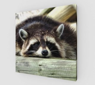 Tired Raccoon preview