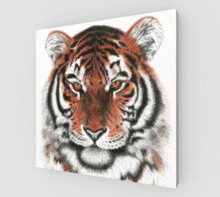 Bengal Tiger preview