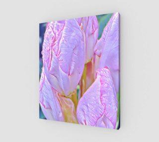 Aperçu de Lavender Magnolia