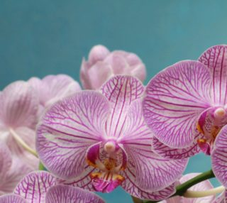Purple Orchid Fabric preview