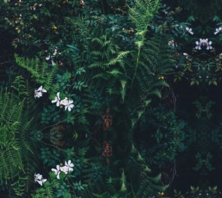 Aperçu de Fleurs Vertes