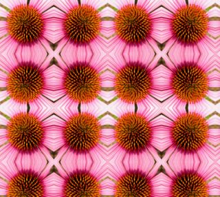 Looking Down the Cone Flower preview