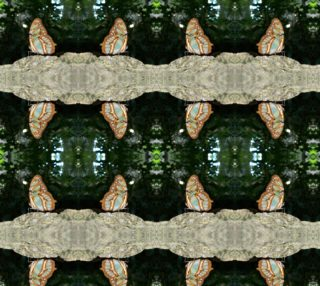 Tailed Jay Butterfly preview