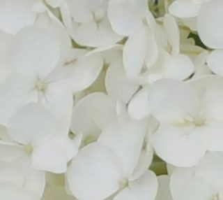 Hydrangea Flowers White Blossom Floral Photography Fabric preview