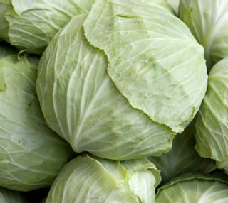 cabbages preview