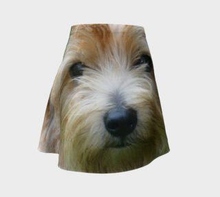 Norfolk Terrier preview