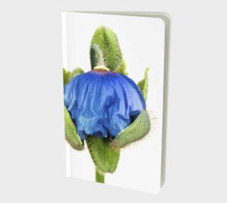 Aperçu de Pavot bleu  /  Blue Poppy