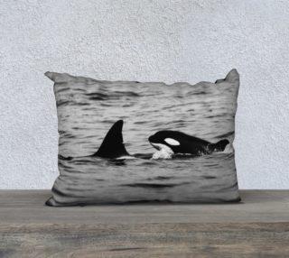 Aperçu de orcas