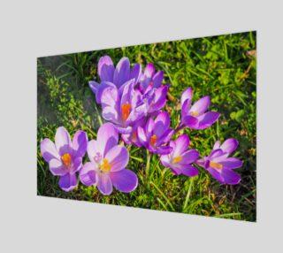 purple crocus preview