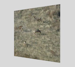 4 Whitetail Deer Wall Art preview