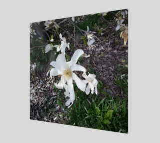 First White Flower of Spring Wall Art preview