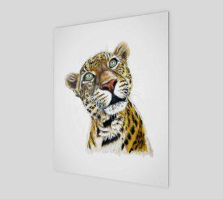 Sundari Asian Leopard preview