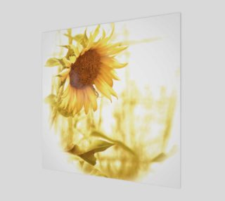 Sunflower in the Light preview