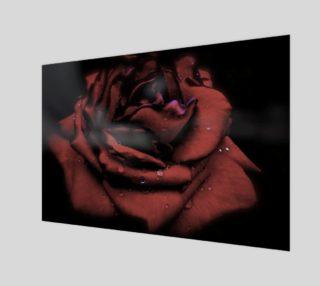 Aperçu de Chiaroscuro Rose in Rain