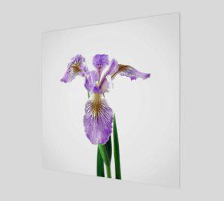 Wild Iris preview