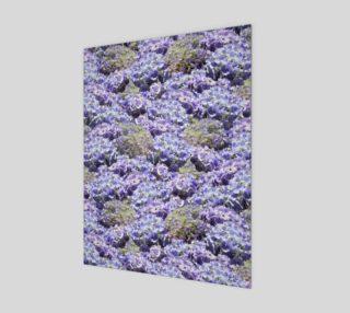 Blue Hydrangeas preview