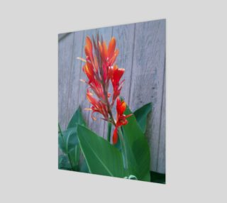 Canna Lily Photographic print by Tabz Jones preview