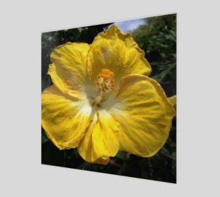 "Aperçu de Sunny Bright Hibiscus Flower (12"" x 12"")"