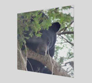 Bear Natural  preview
