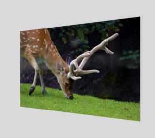 Fallow Deer preview