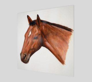 Bay horse portrait preview