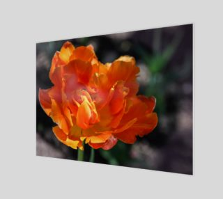Orange Tulip Flower Head preview