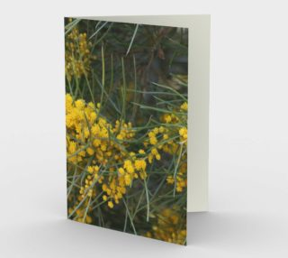 Golden Wattle 2 preview