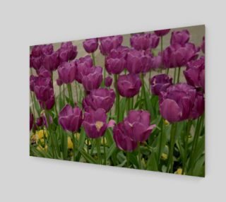 purple tulips forever preview