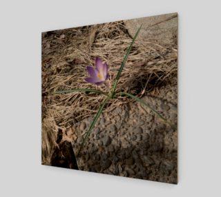 Poppy's Lone Crocus Flower Wall Art preview