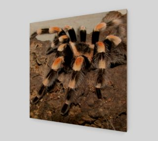 Mexican Red Knee Tarantula Spider Wall Art preview