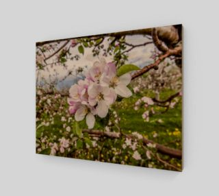 Apple Blossoms preview