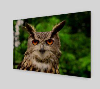 Aperçu de Owl