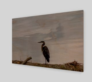 Great Blue Heron preview