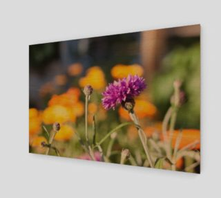 Purple Flower Photography Print preview