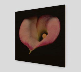 Valentine Calla Lily preview