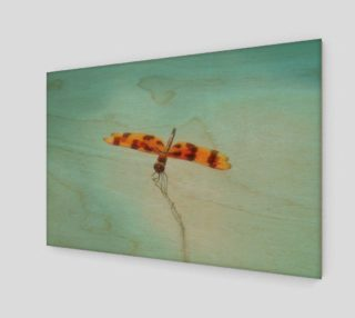 Aperçu de Tiger Dragonfly