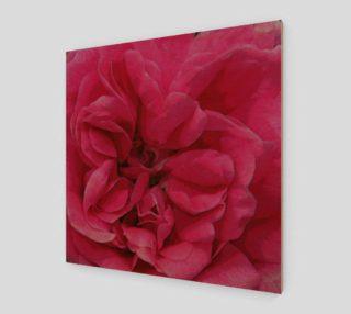 Multi Petaled Rose preview