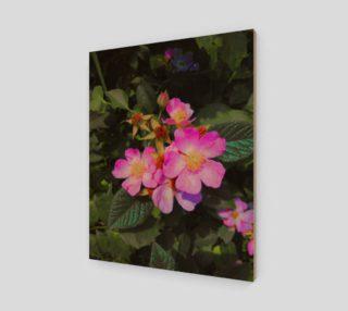 Aperçu de Wild Roses Photographic print by Tabz Jones