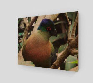 Aperçu de Purple Crested Turaco